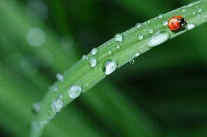 sonidos de agua relajantes y regenadores